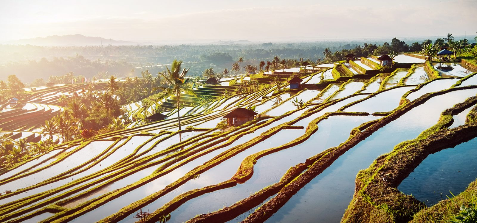 Bali Rice Terraces.